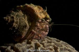 Hermit crab by Iyad Suleyman