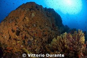 Colors of mediterranean underwater landscape by Vittorio Durante