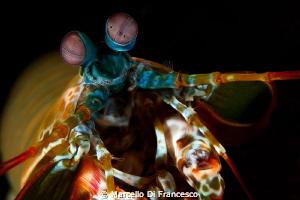 Mantis by Marcello Di Francesco