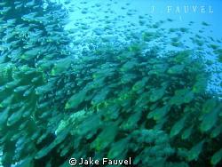 Huge school of fish passing by, was right in the middle o... by Jake Fauvel