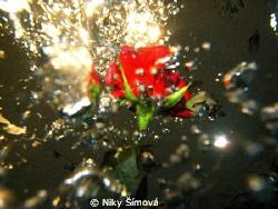 rose with dive bubble and light by Niky Šímová