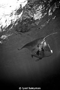 Flying away Manta... by Iyad Suleyman