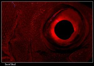 Big Red Eye :-D by Daniel Strub