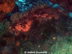double shot by Andrea Mucedola