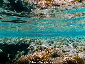 Shallow water by Iyad Suleyman