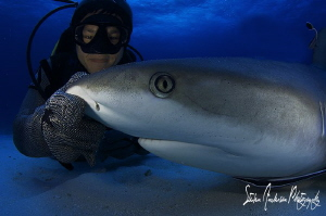 My friend Chang gets up close and creates shark hypnosis,... by Steven Anderson