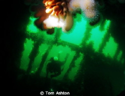 Diver entering the Thesis, Sound of Mull, Scotland.