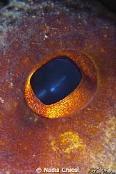 Octopus eye by Nadia Chiesi