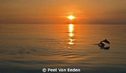 Sunset dolphins by Peet Van Eeden