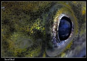 the eye :-D (lota lota) by Daniel Strub