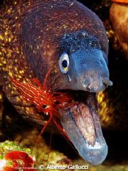 Moray and shrimp by Alberto Gallucci