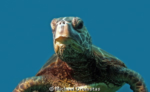 Kona Turtle...f8, 1/100,iso100 by Michael Drumstas