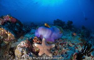 Stella con anemone by Marco Bartolomucci