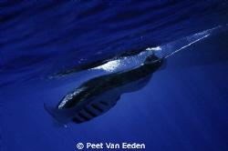 Breaking the surface by Peet Van Eeden