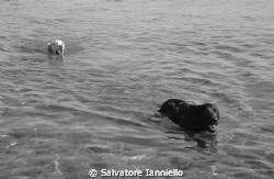 Bianco e Nero by Salvatore Ianniello