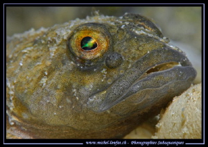 The eye of a resting Bullhead, freshwater sculpin... ;O)... by Michel Lonfat