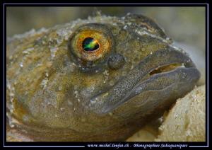 The eye of a resting Bullhead, freshwater sculpin... ;O)... by Michel Lonfat