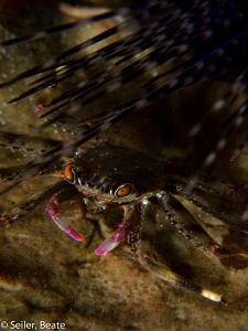 Crab in the surge by Beate Seiler