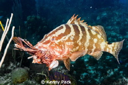 The Lionfish epidemic is starting to meet its demise than... by Kenny Pack