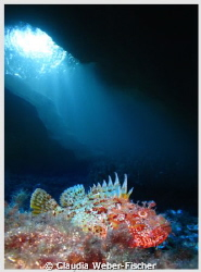 Scorpion fish + ambient light, Comino caves Canon IXUS 1... by Claudia Weber-Fischer