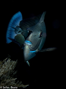 Out of the dark, nightdive at the Alam Batu housereef by Beate Seiler