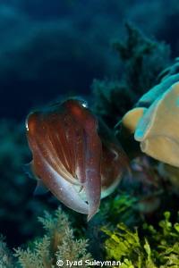 Baby Cattlefish Sigma 70mm macro lens, 1.4x teleconverte... by Iyad Suleyman