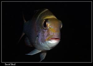 emperorfish :-D by Daniel Strub