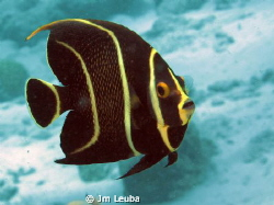 Nice Angel fish by Jm Leuba
