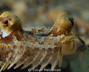 Flounder up front & personal! by Suzan Meldonian