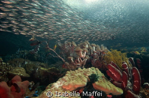 FOLLOW YOUR DREAMS by Isabella Maffei