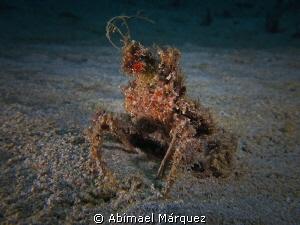 A Different Crab by Abimael Márquez