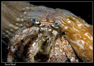 Hermit crab - night dive in Marsa Shagra :-D by Daniel Strub