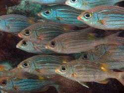 Schooling squirrel fish. Olympus C-8080 wide zoom / olymp... by Quentin Long