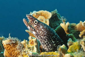 Moray posing by Michael Drumstas