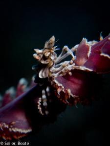 Xenon crab by Beate Seiler
