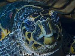 Turtle in relaxation !!  by Nadia Chiesi