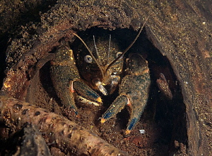 Knothole uw home.