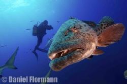 could I have a sardine, please? by Daniel Flormann