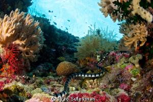 Sea snake by Iyad Suleyman