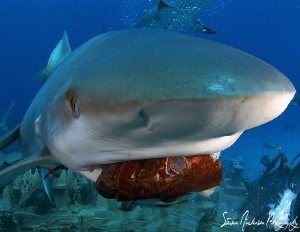 Now thats a mouthful - this image was taken off Nassau du... by Steven Anderson