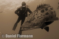 please...one sardine more... by Daniel Flormann
