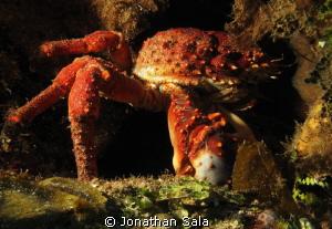 King Crab by Jonathan Sala
