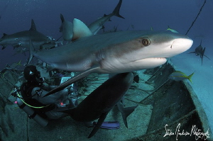 Just passing thru - Reef Sharks in and out they swam duri... by Steven Anderson