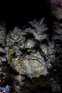Ugly guy by Pietro Formis