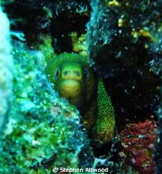 Peek a Boo!!!! by Stephan Attwood