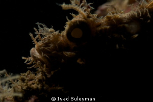 Silhouette of Scorpion fish by Iyad Suleyman