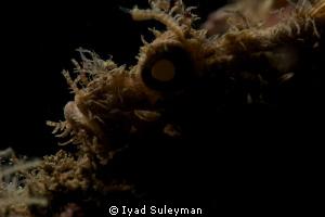 Silhouette of Scorpion fish by Iyad Suleyman