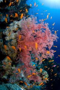 soft corals sharm el sheikh by Pietro Formis