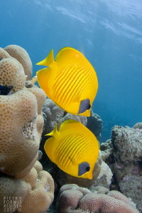 Yellow by Pietro Formis