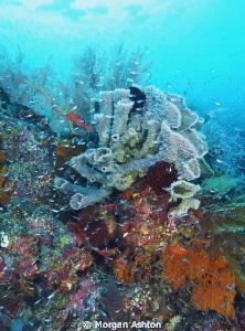 Tube Sponge. Note: dark shadows top left are schooling Bu... by Morgan Ashton
